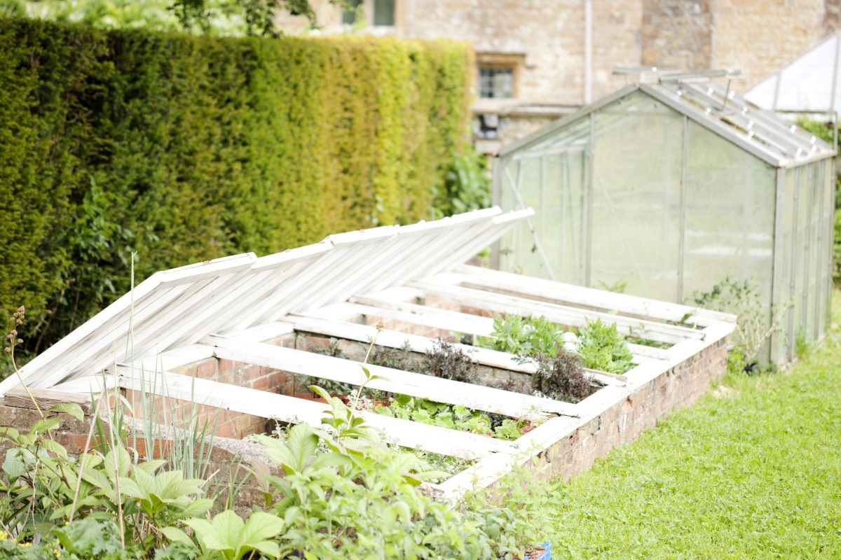 cold frames, greenhouse, plants
