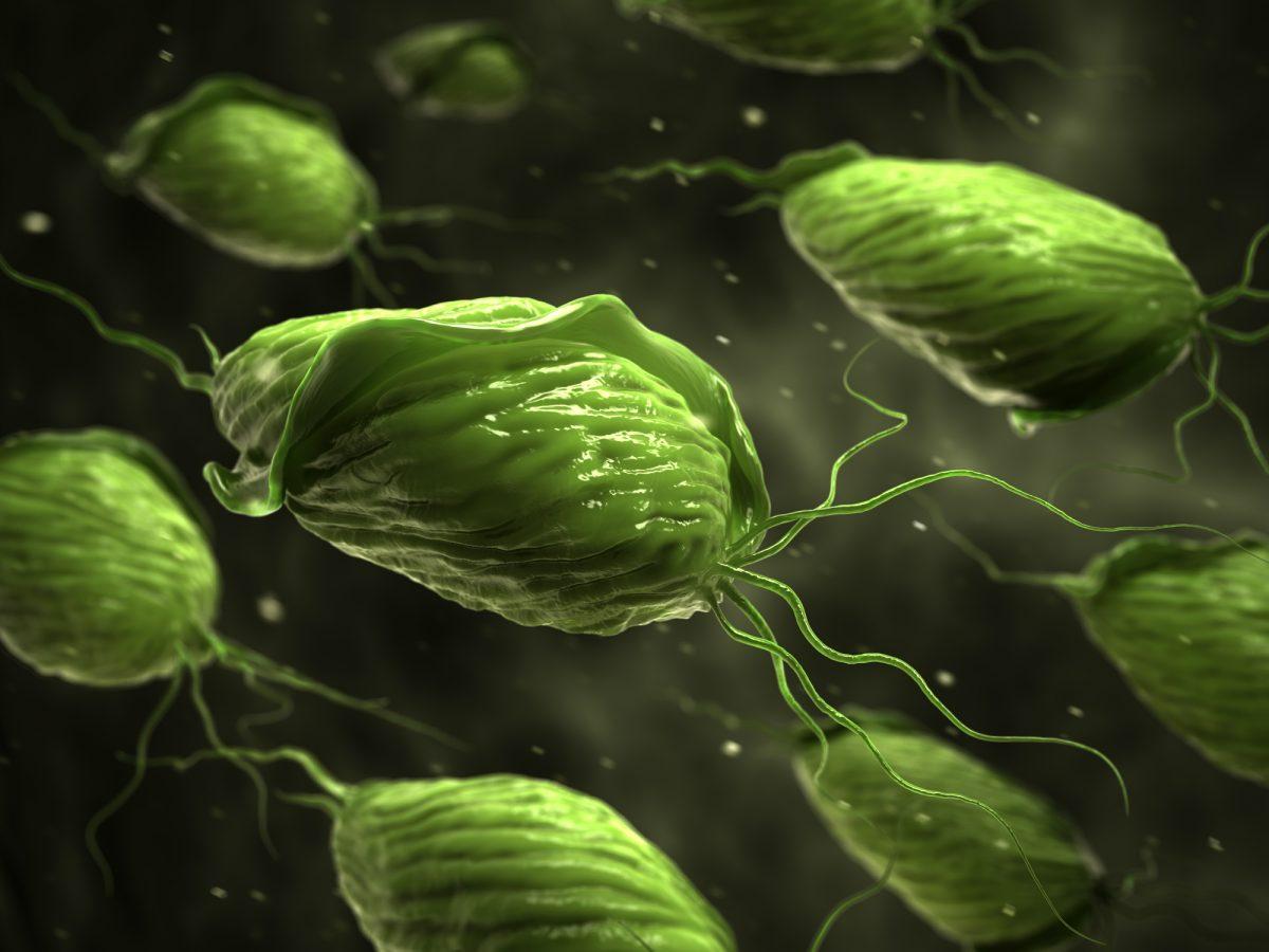 Trichomonas vaginalis parasite