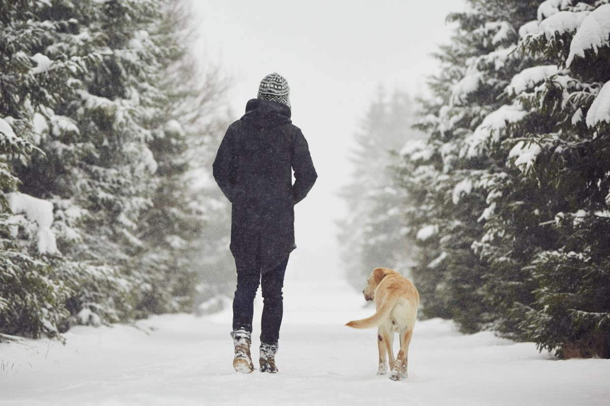 Vaseline protects dogs' paws from snow