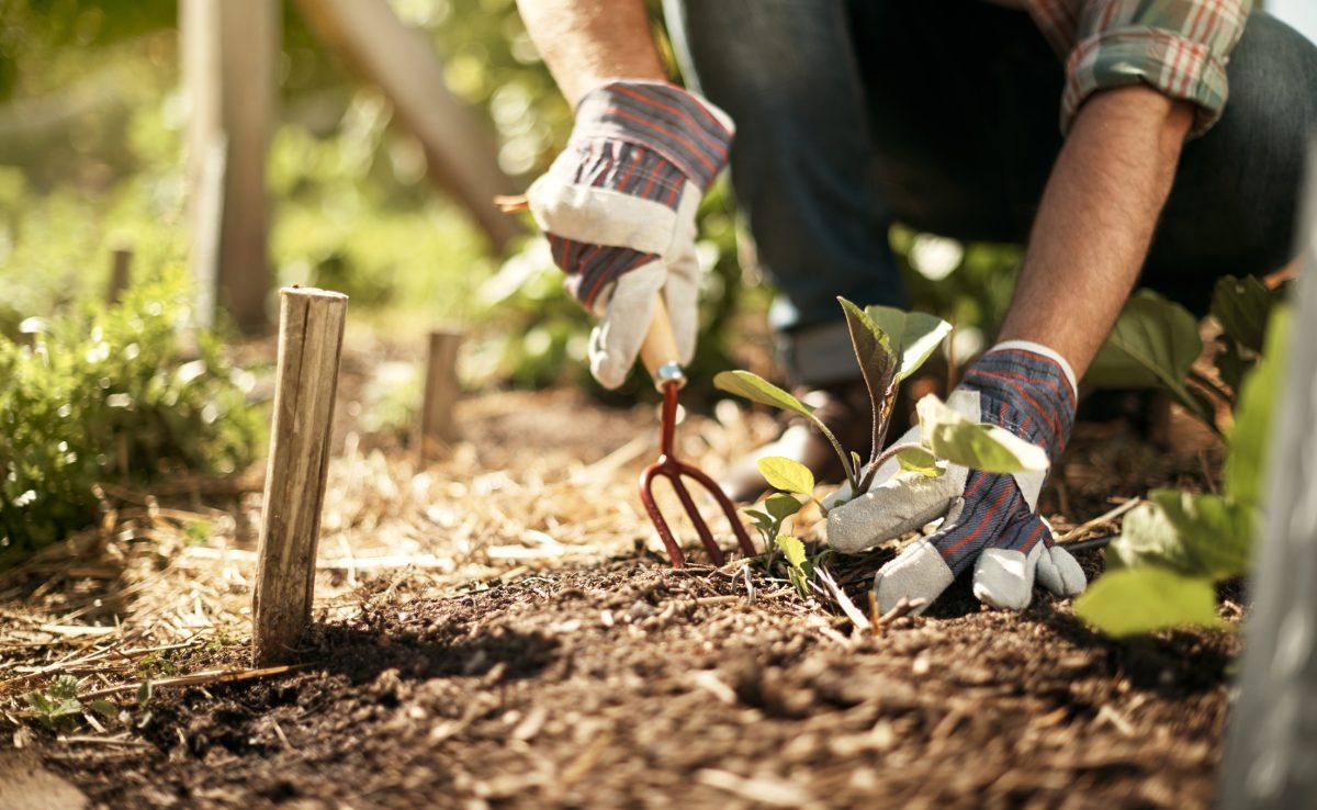 gardening gloves dirt