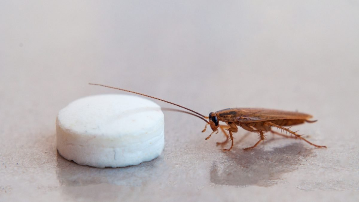 Roach traps and powders work