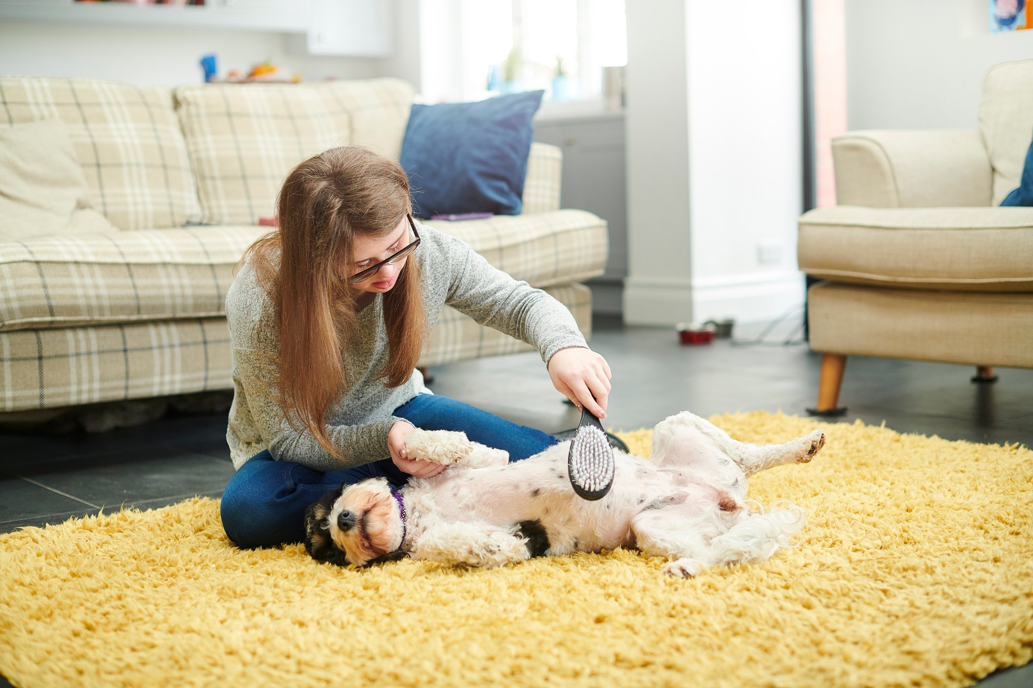 teenage girl grooming her dog