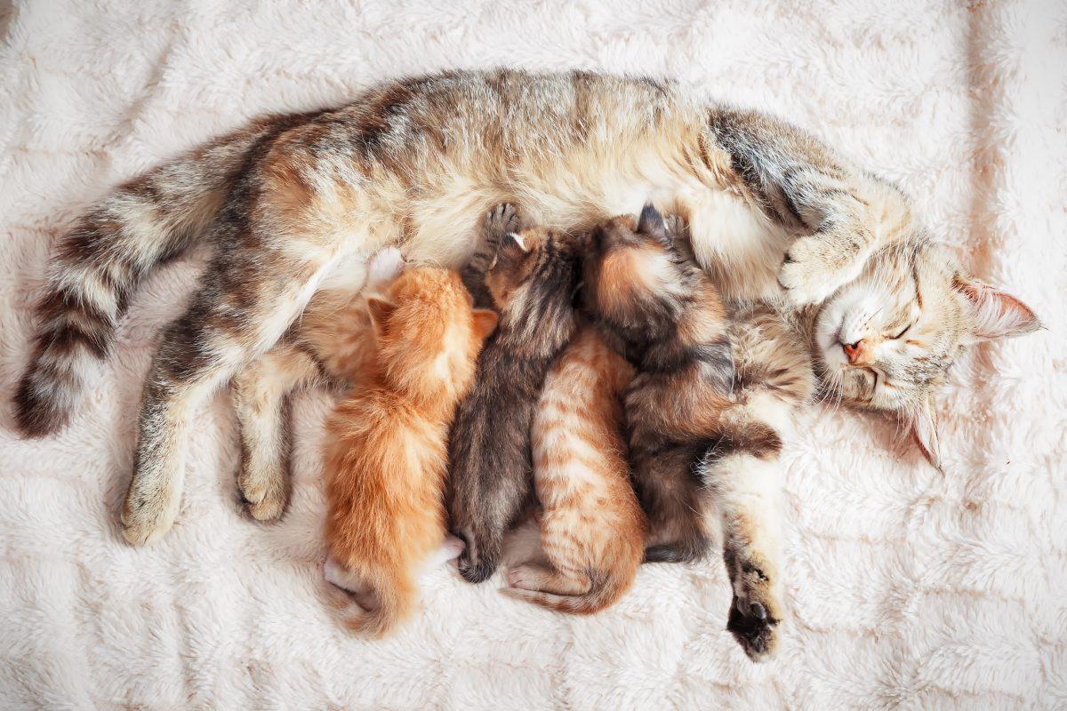 trisomy mother cat kittens