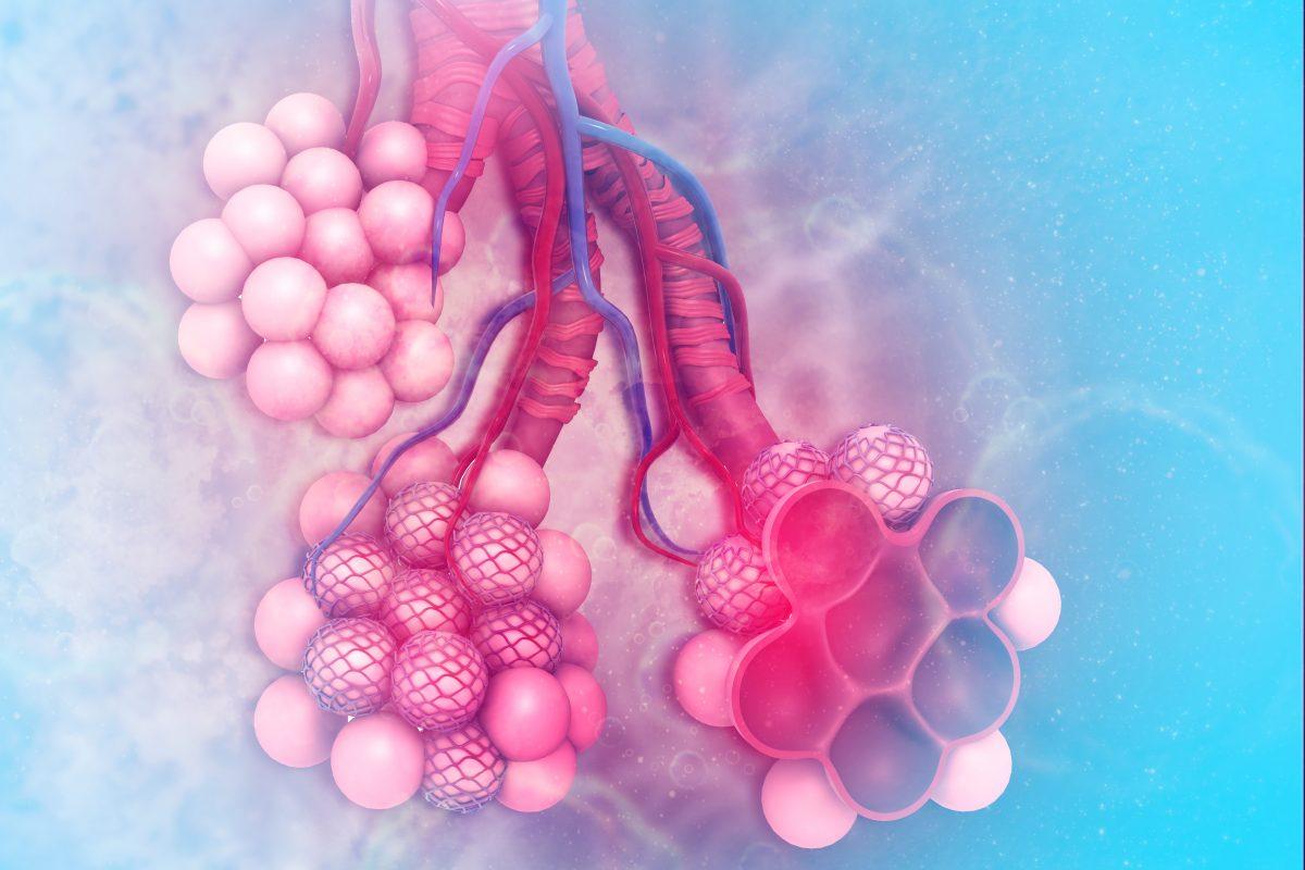 alveoli acini oxygen