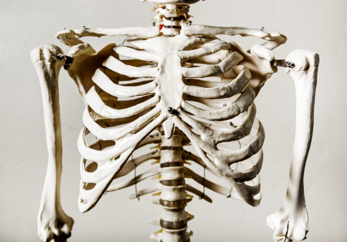 rib cage protection