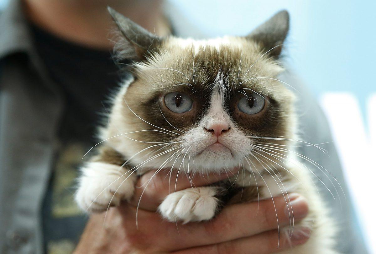 tarder sauce millionaire grumpy cat