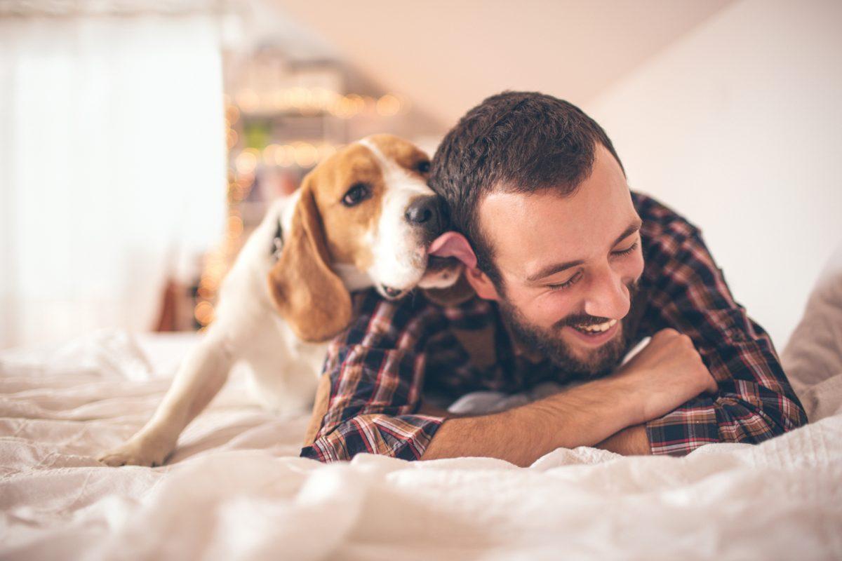 Beagles like company