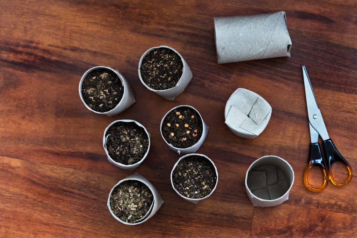 seedlings plant soil toilet paper tubes