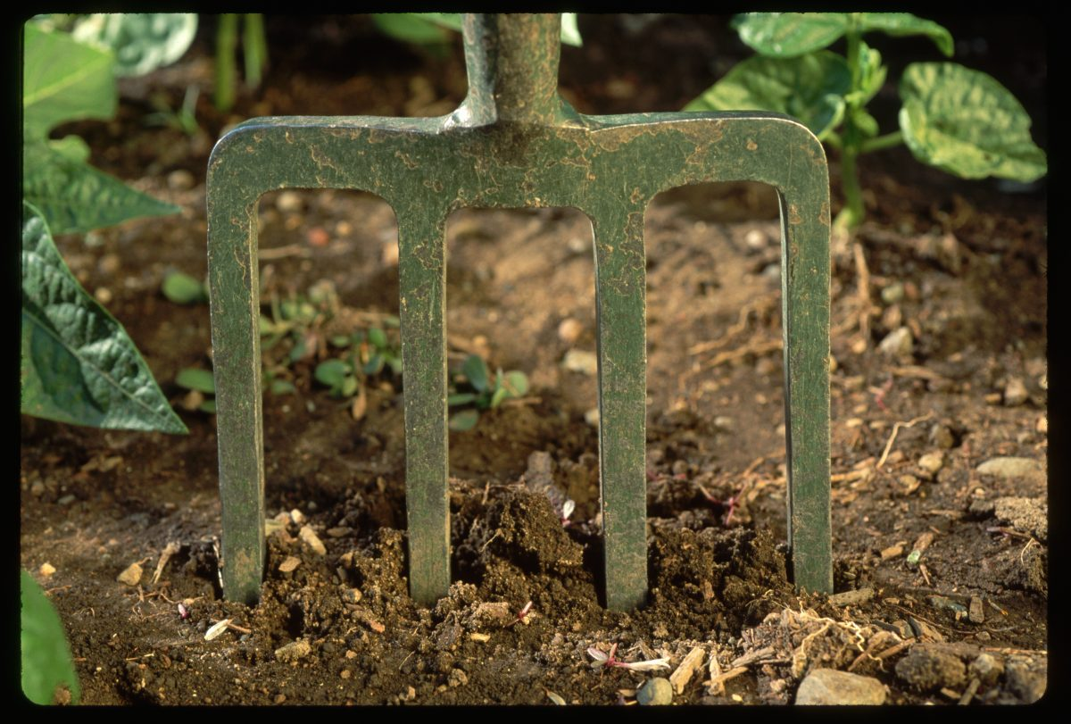 sowing seeds spading fork