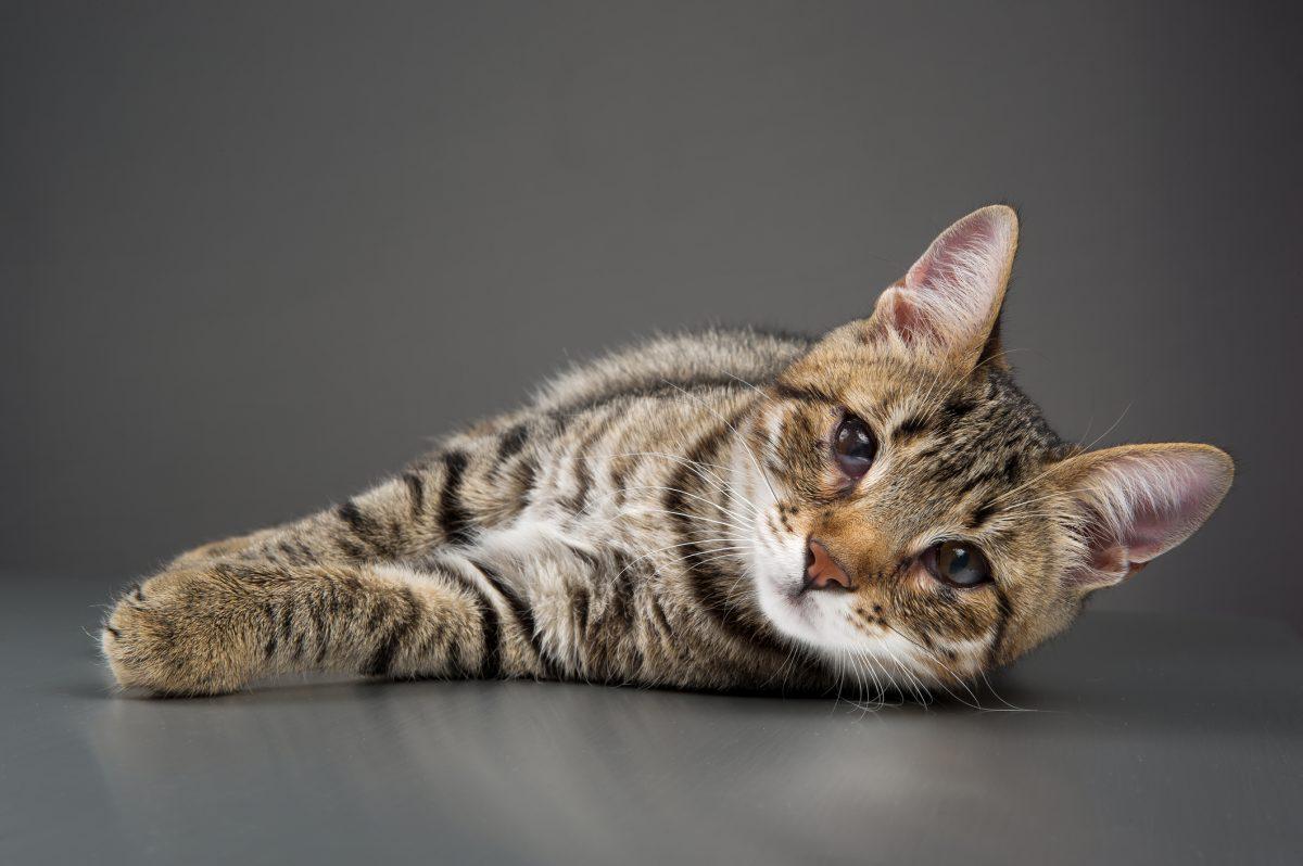 third eyelid droopy eyes kitten