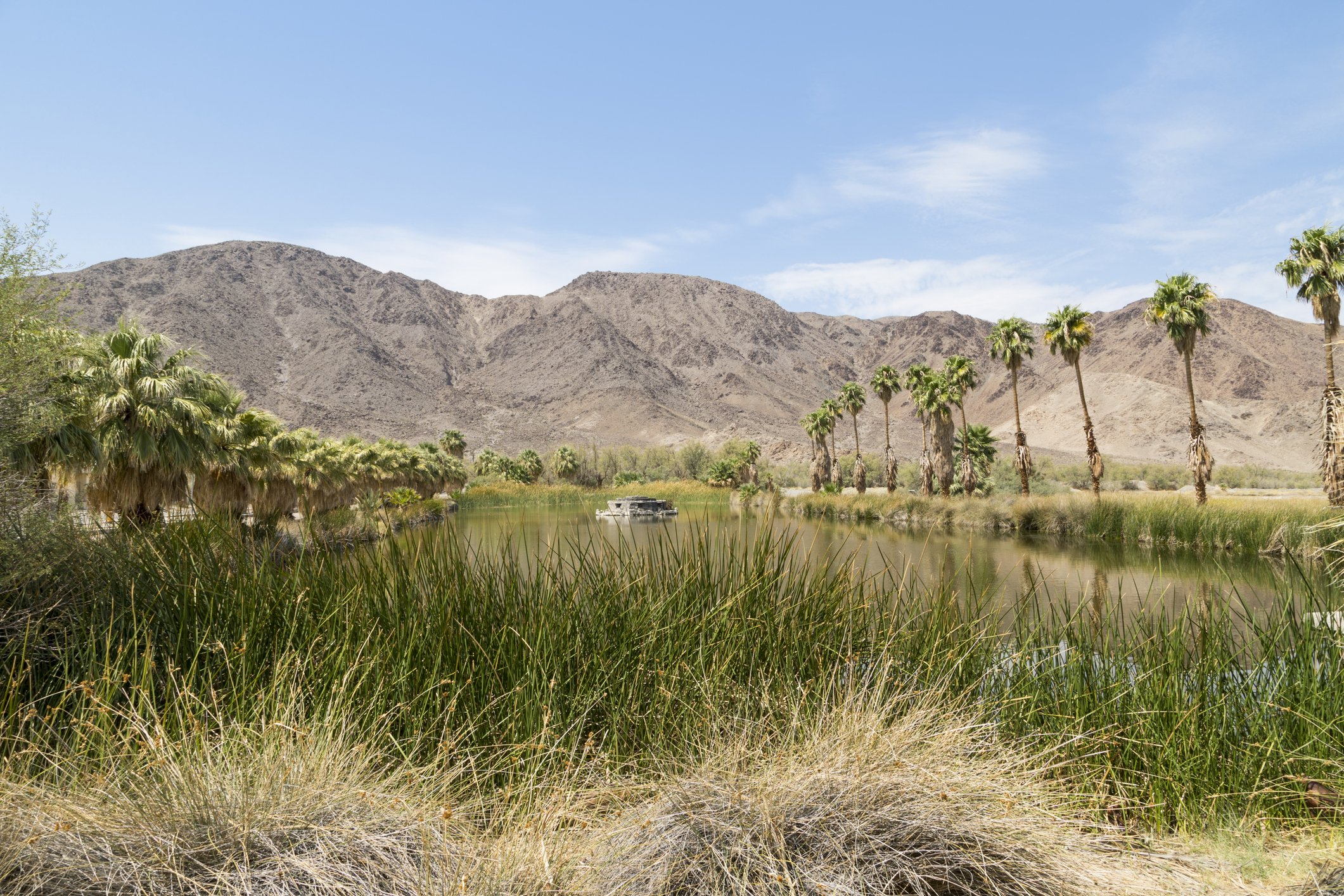 A lake in the desert at Zzyzx, formerly Soda Springs in California