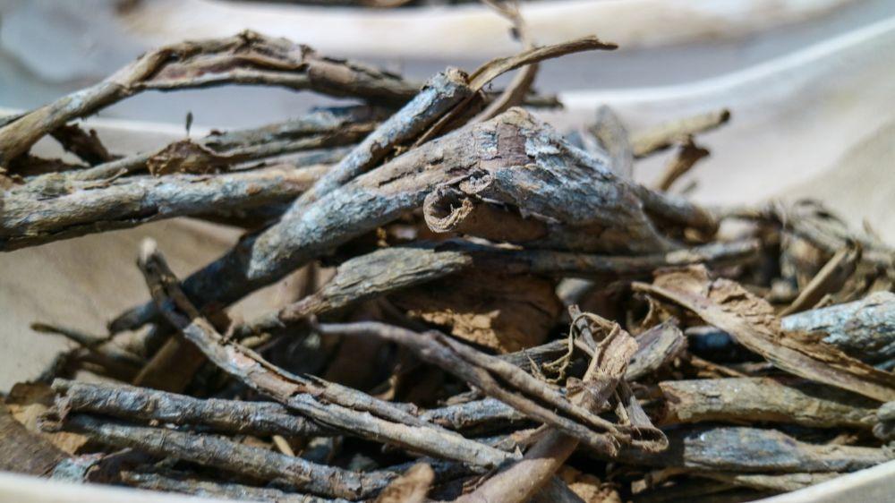 cinchona tree quinine