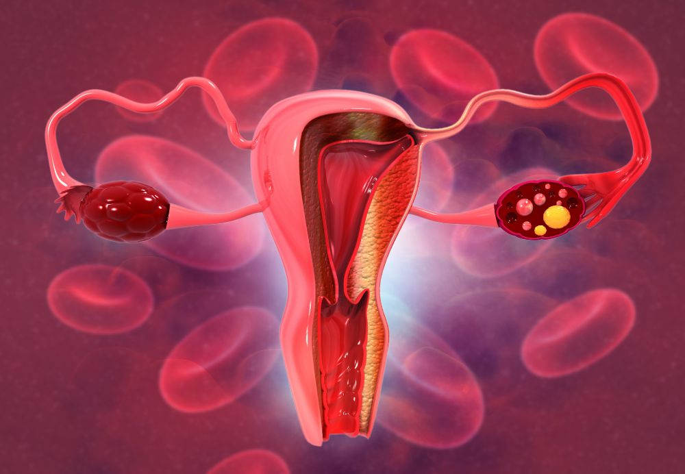 structure and function of the ovaries