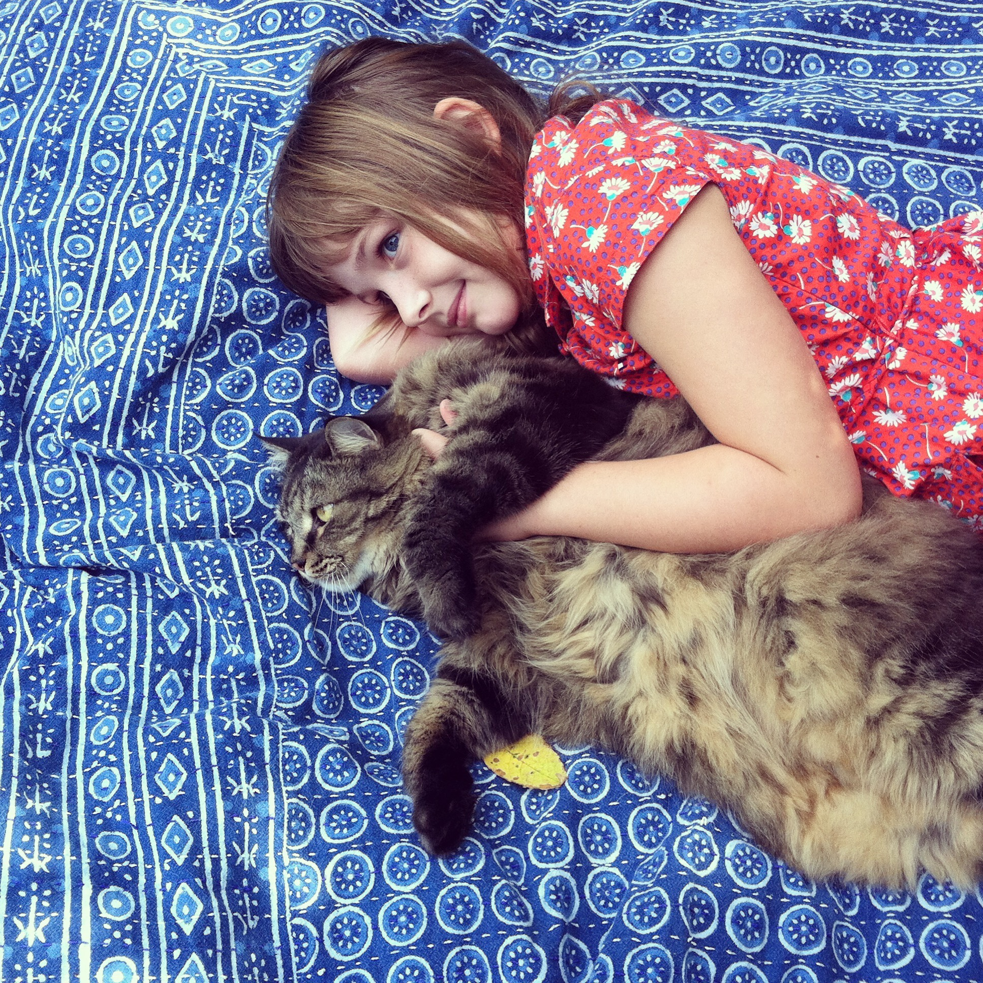 Portrait of a little girl in a red dress cuddling and hugging her enormous Maine Coon cat with love and affection as they lay on a blue and white patterned blanket in a garden. Childhood. Friendship.