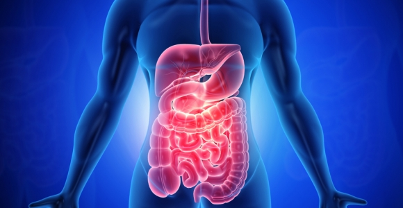 10 Facts About the Digestive System