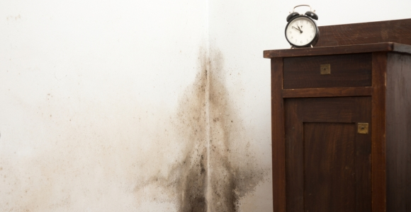 Signs of Black Mold Exposure