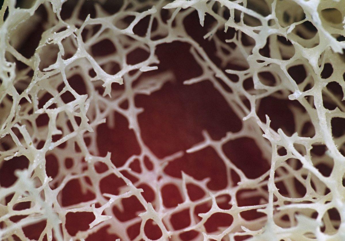bone marrow maturation