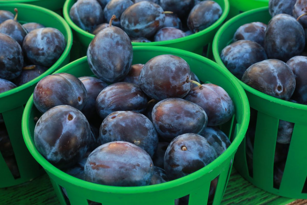 prunes in green baskets