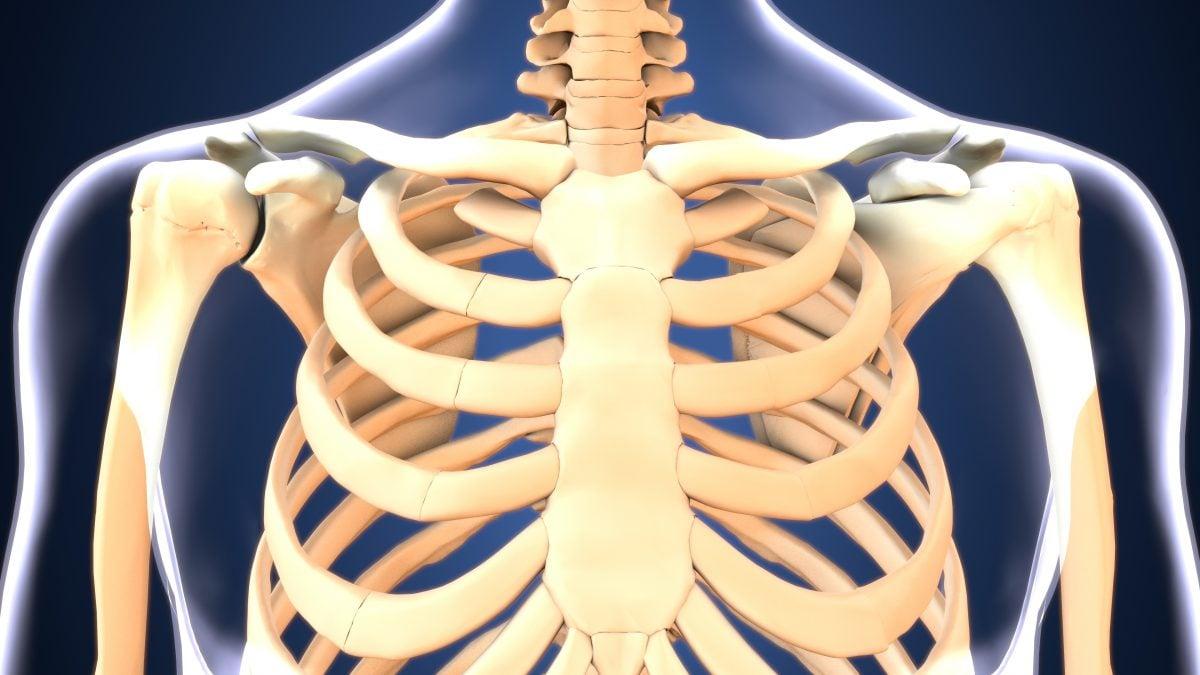 sternum manubrium chest bone