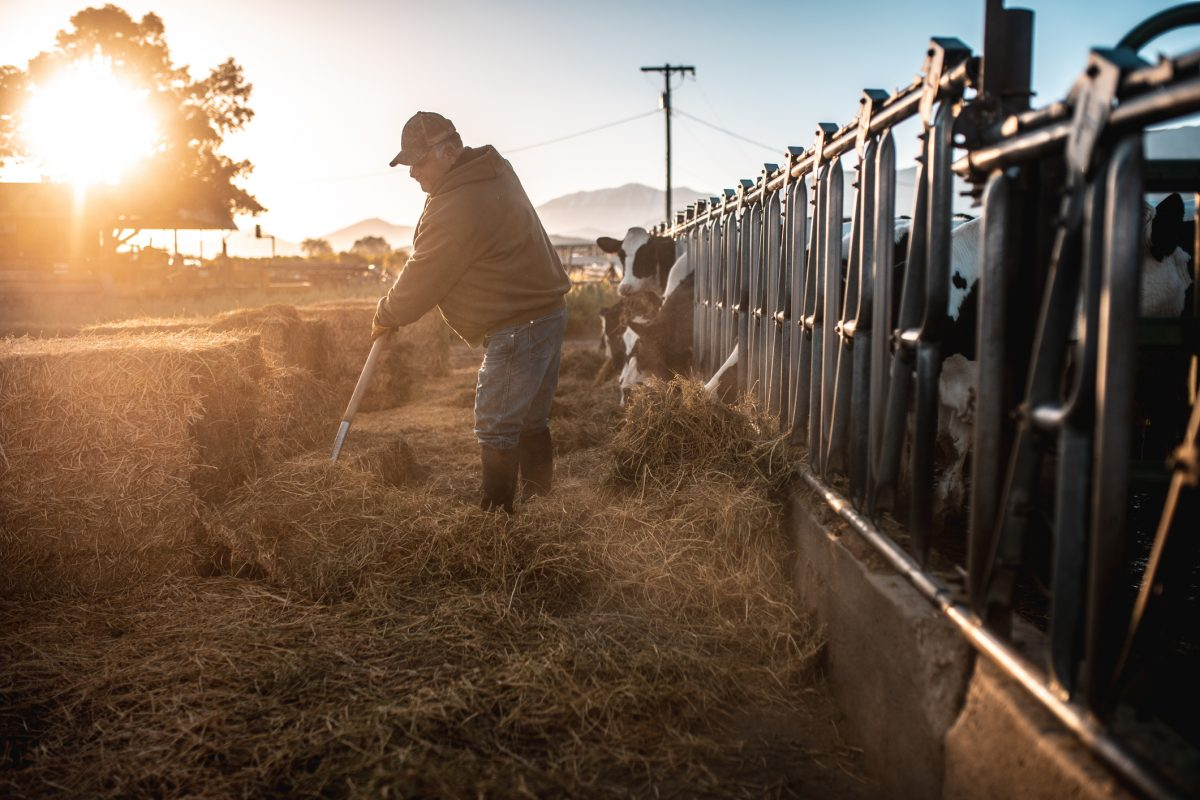 man farmer moving hay