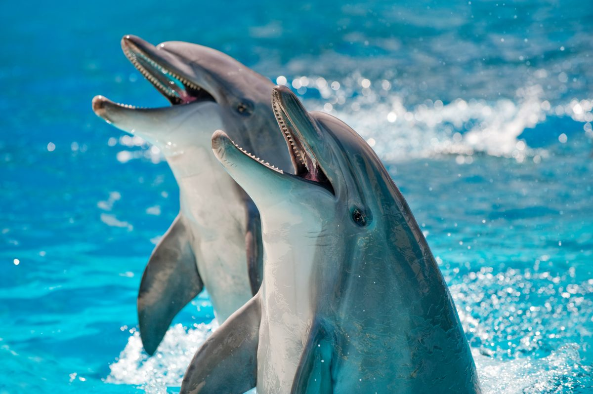 Pair of playful dolphins