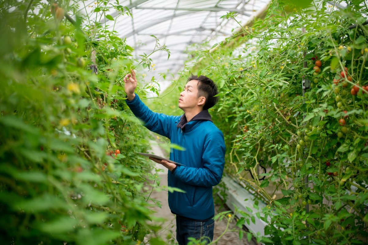 Certified USDA National Organic Program