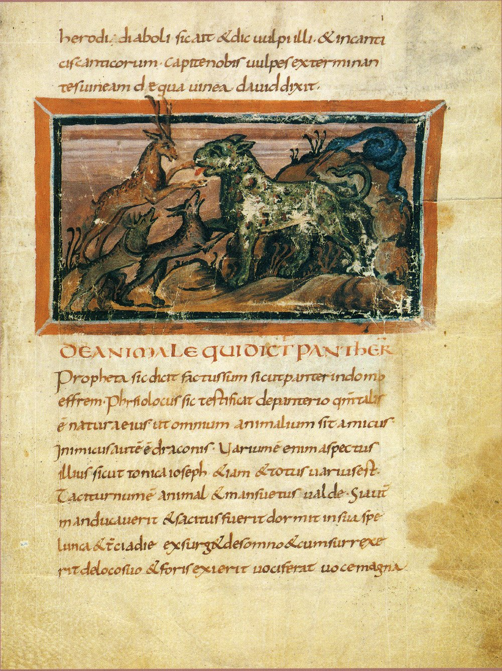 Panther, Bern Physiologus, 9th century