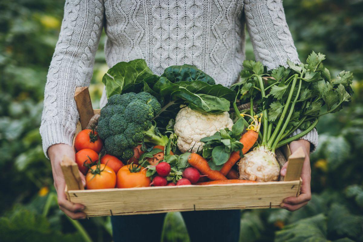 healthy food consumption vegetable garden