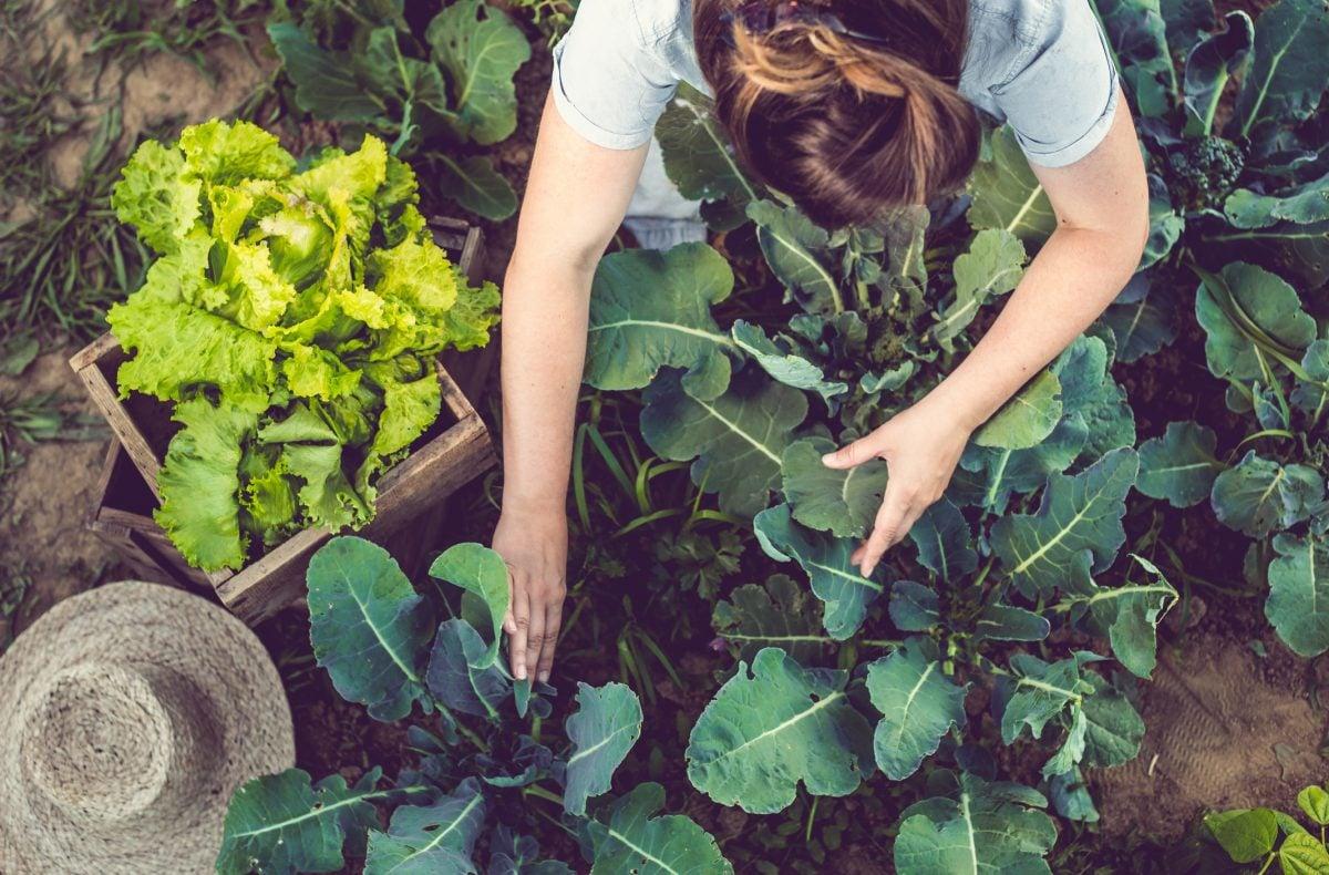Organic Health Pesticides Cancer Allergies