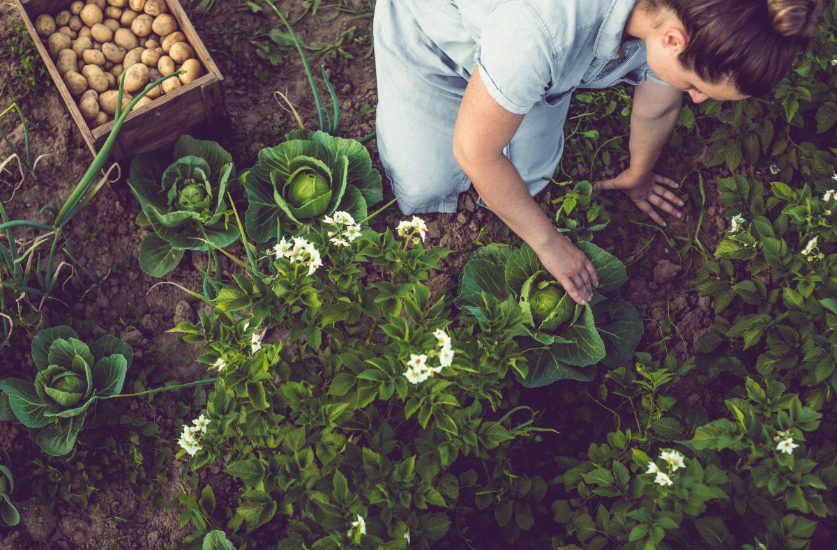focus distraction pain relief gardening