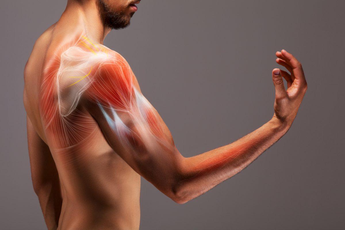arm anatomy xray