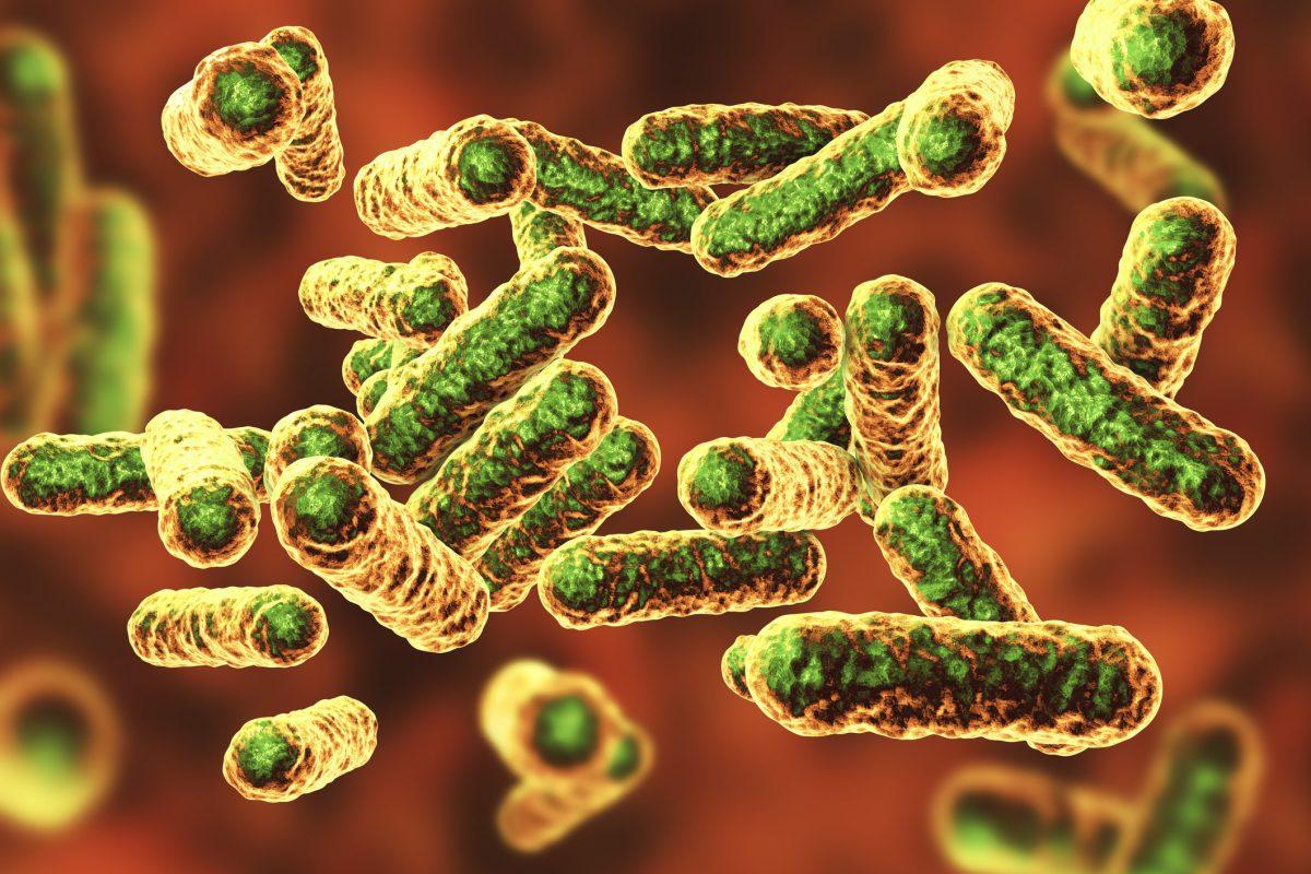 Bartonella bacteria infection