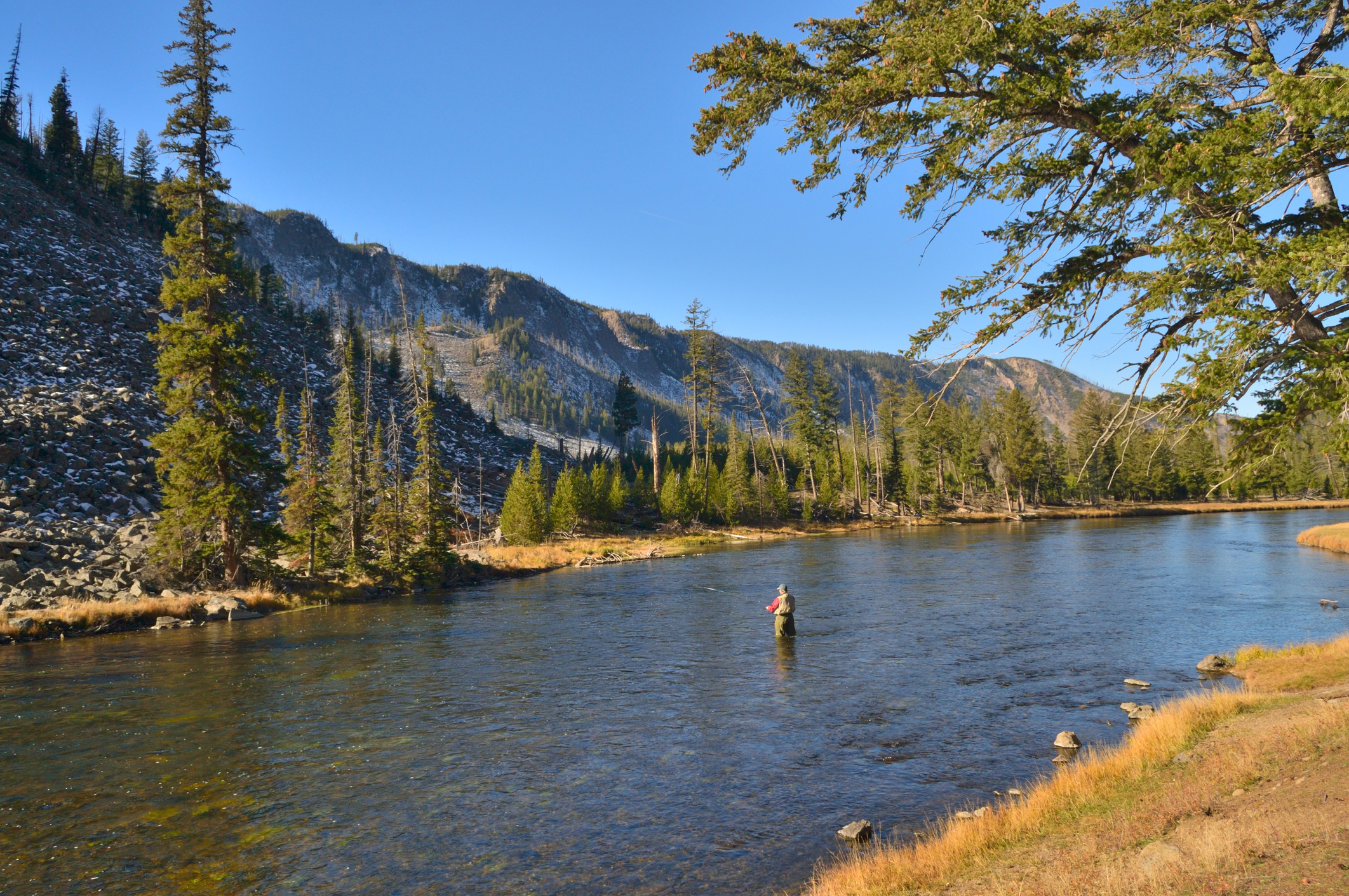 A retired man fly fishing in the Yellowstone National Park is at peace with his world and enjoys the solitude and beauty of this leisure activity on a brisk fall morning
