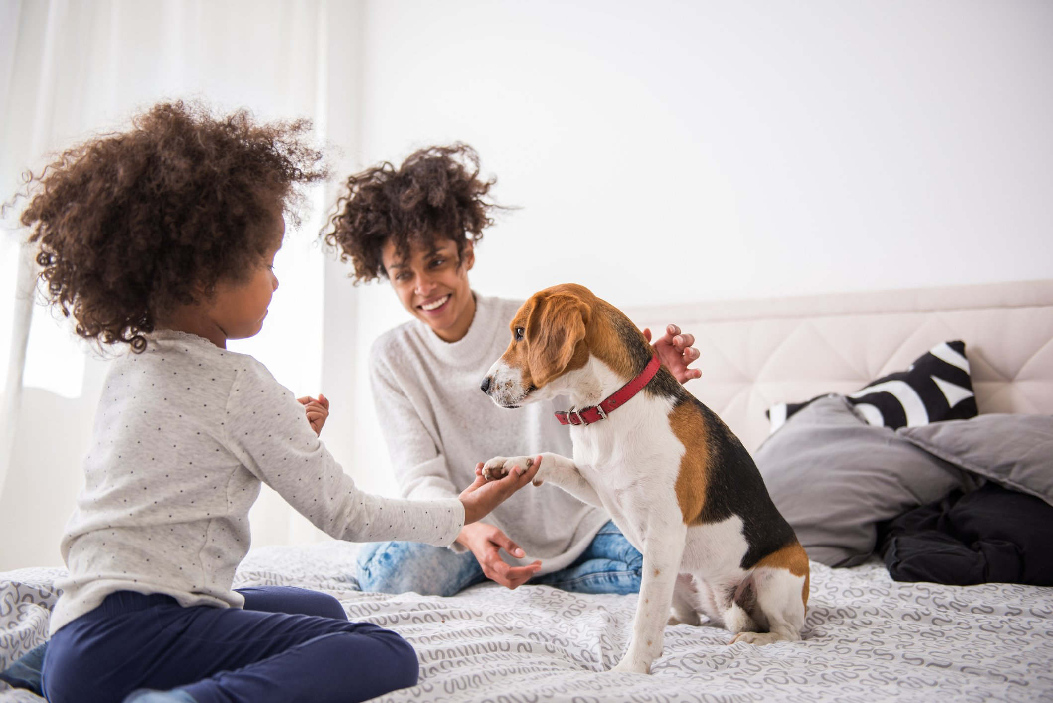 Young cute girl playing with her dog.