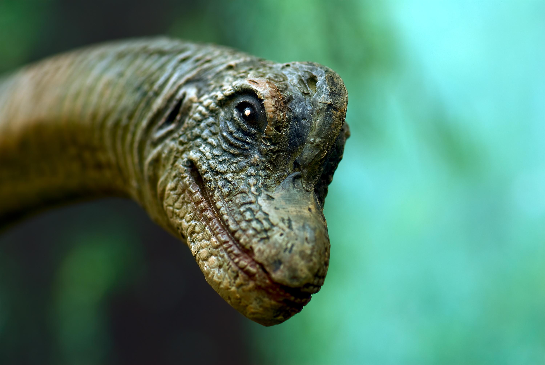 Dinosaur Close-up at exhibit