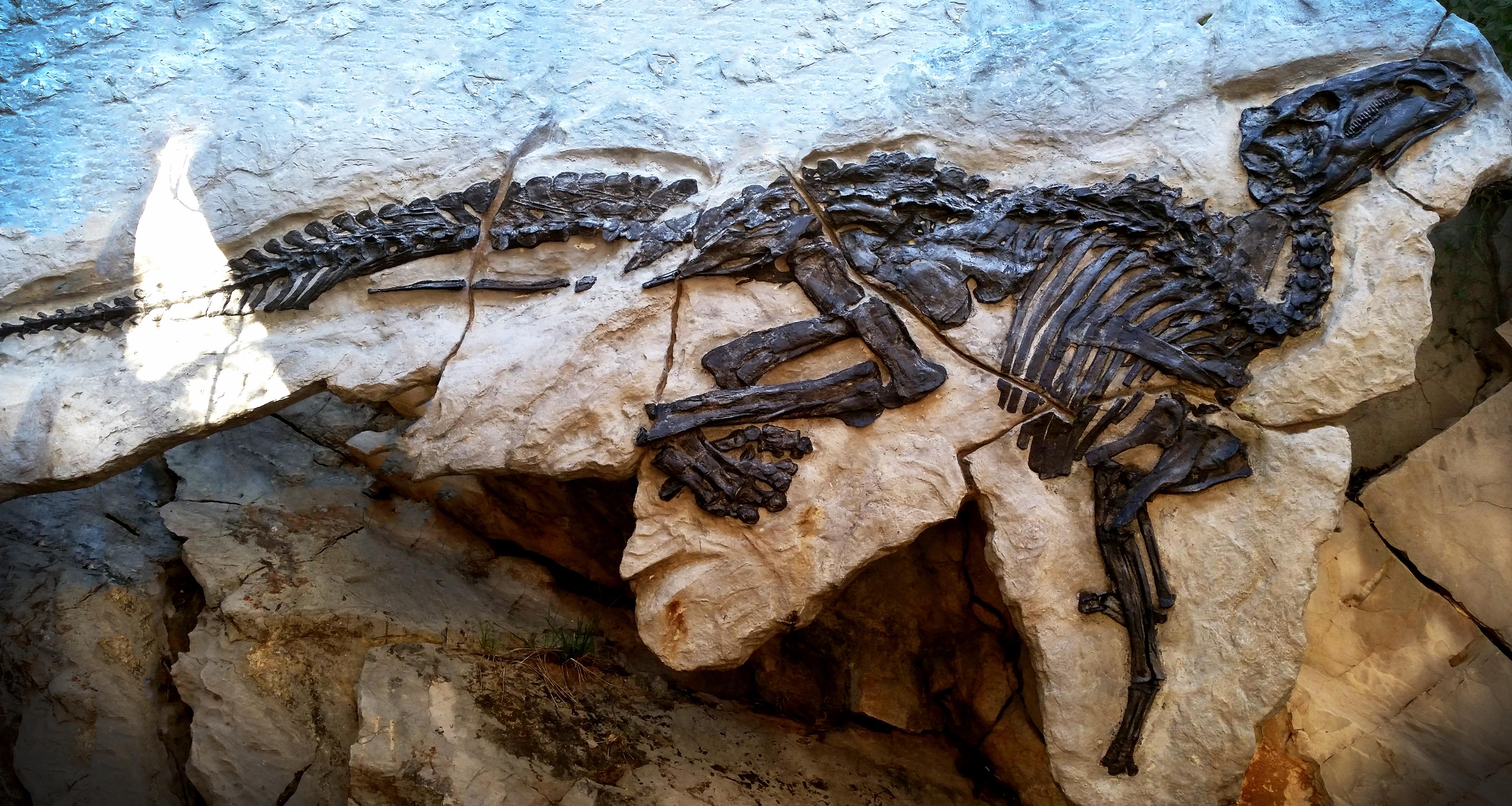 Dinosaur skeleton; fossil in a rock; outdoor, Italy.