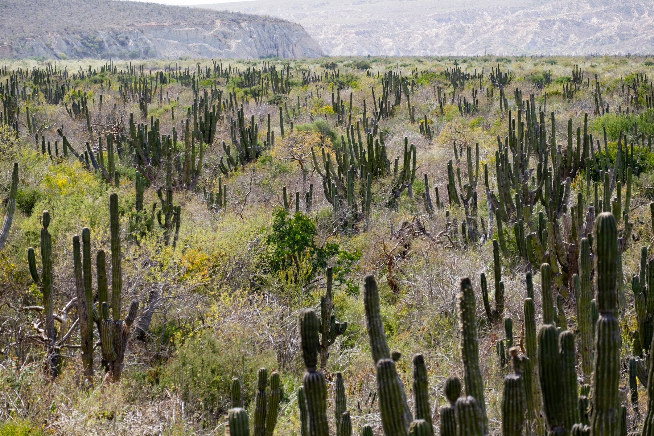 fields in Mexico