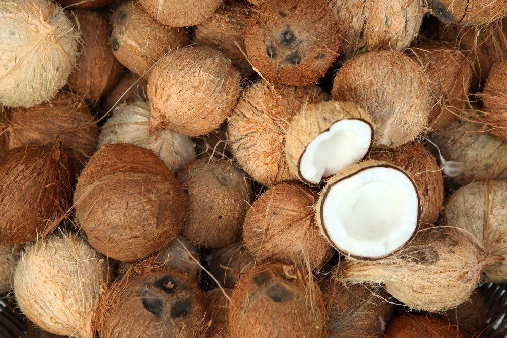 close up of many coconuts