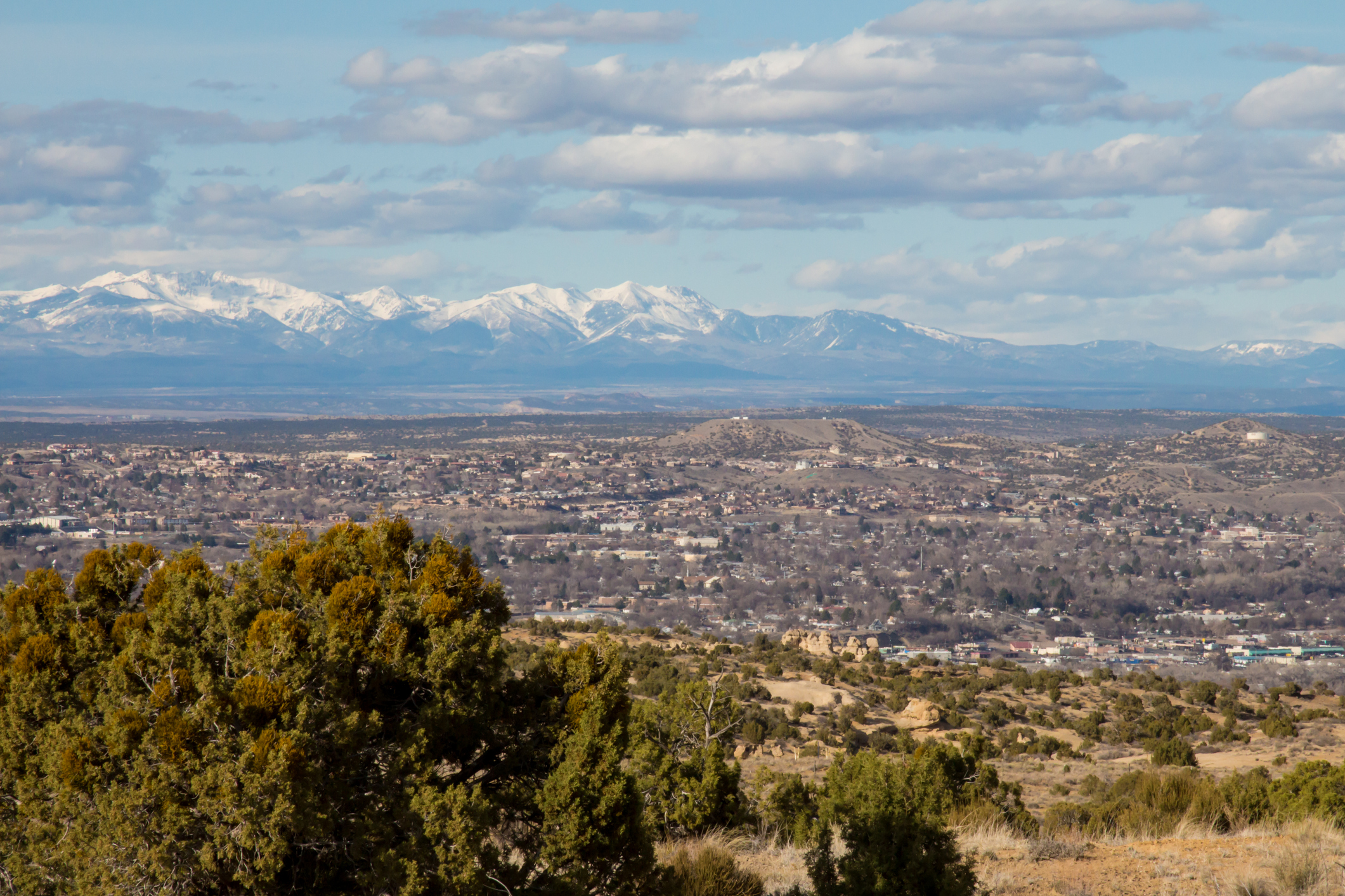 Image looking down on the town of Farmington in northern New Mexico. In the distance are the snowcapped peaks of the San Juan mountains in Colorado. The buildings of the city are interspersed with trees, and there is a pinion pine in the foreground.