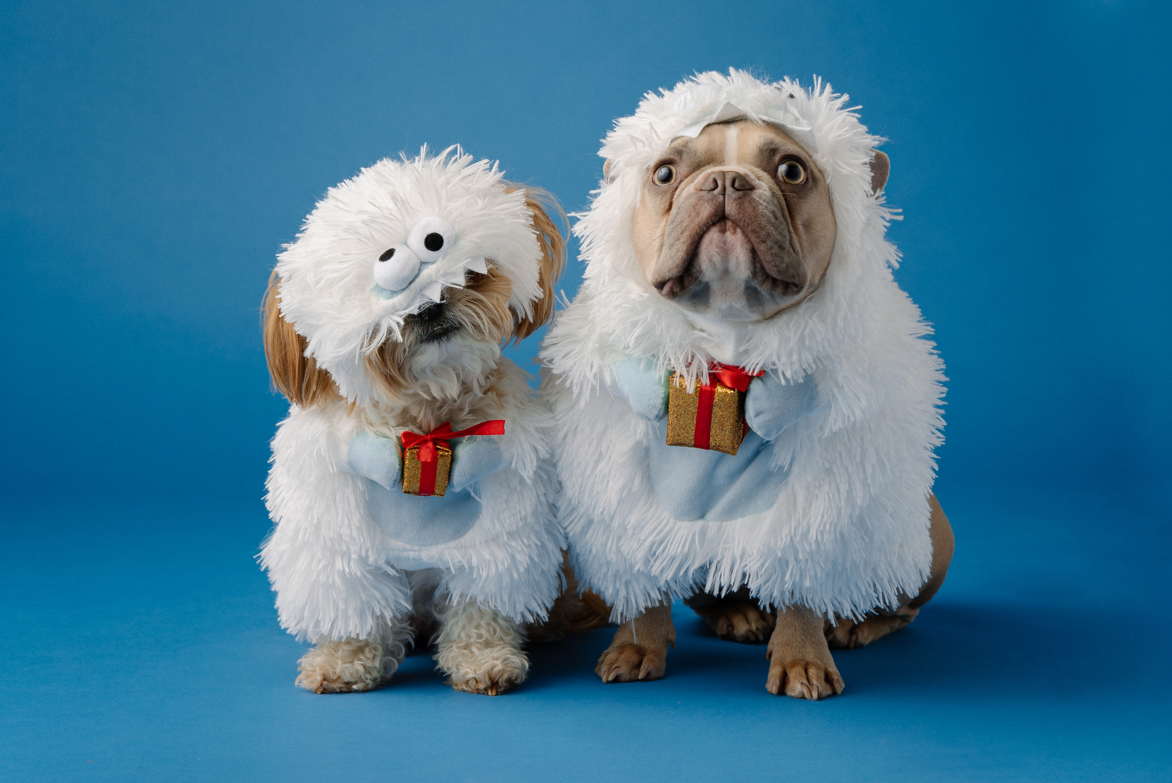 Two dogs dressed like Abominable Snowmen