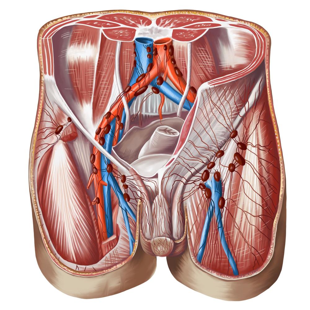 the iliac veins in the pelvic area