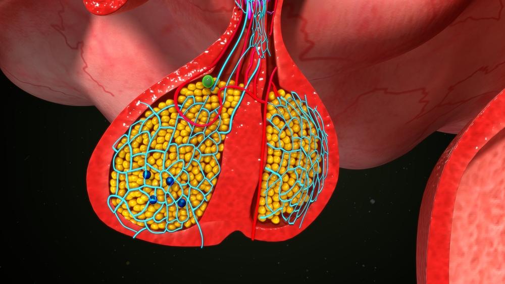 digital illustration closeup of the pituitary gland
