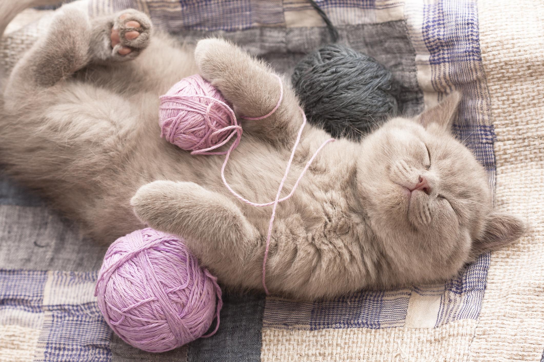 sleeping kitten with yarn wrapped around its torso