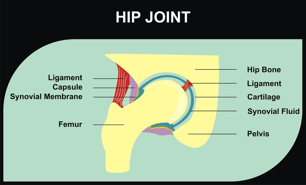 digital image of the hip joint and labrum cartilage
