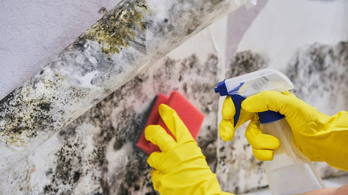 rising damp moisture mold cleaning