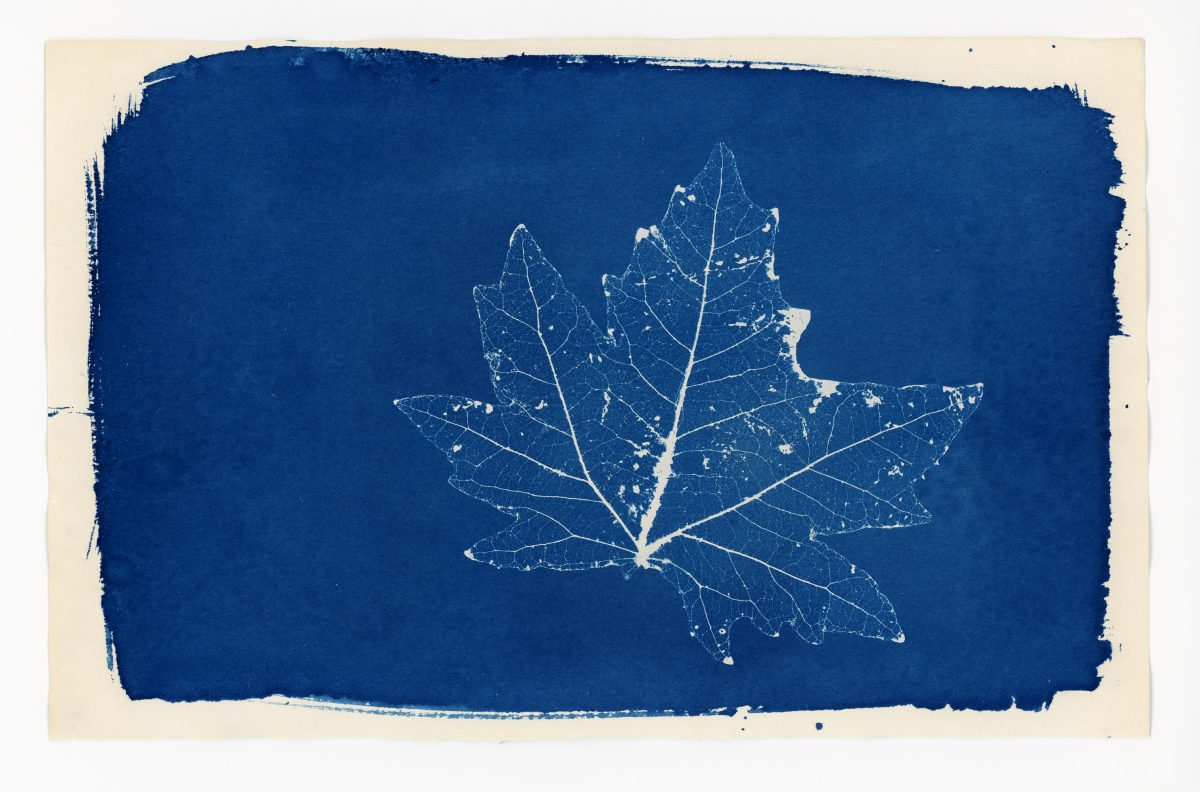 Cyanotype prints are a clever way to incorporate Classic Blue into your home decor.