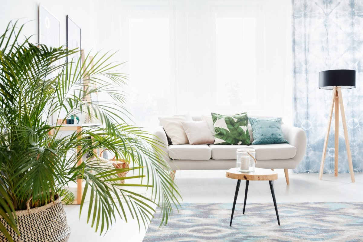 Non-Toxic Parlor Palm