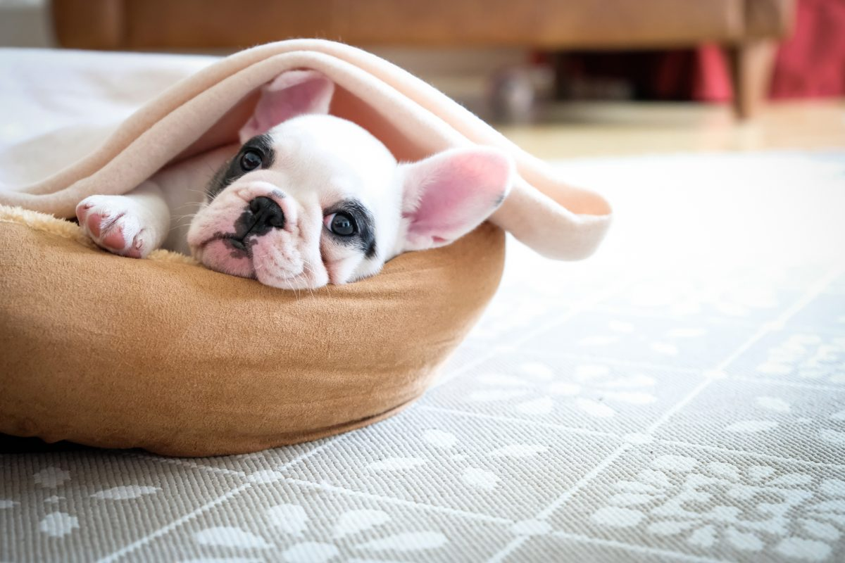 A dog relaxing in its bed