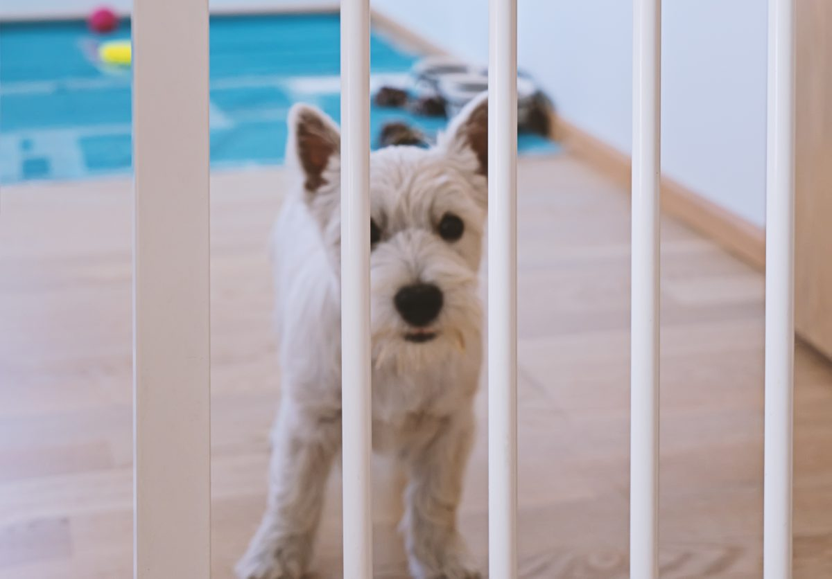 A white puppy being kept in a room with a gate