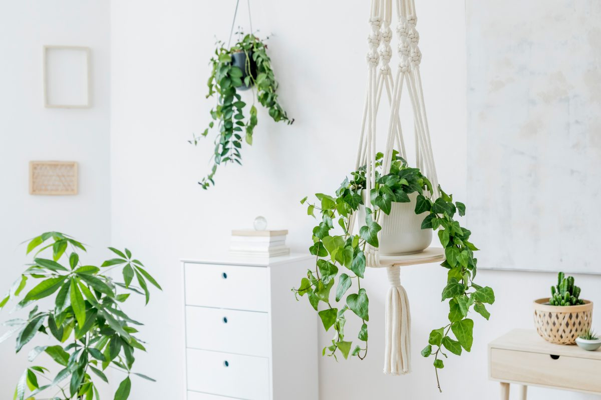 Two macrame hanging planters in a bright room